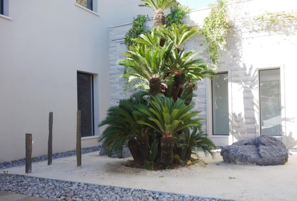 Jardin exotique palmiers