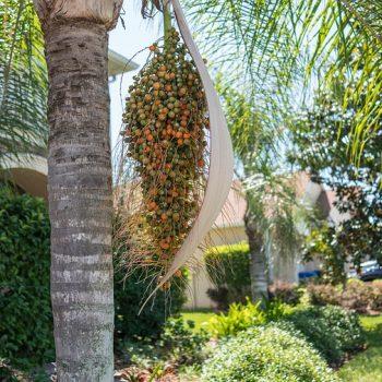 jardin exotique palmier